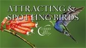 Attracting and Spotting Birds